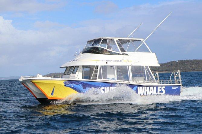 Hervey Bay Whale Swim and Watch