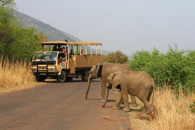 Full Day Pilanesberg National Park Safari