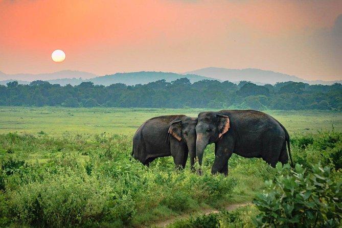 Udawalawe National Park Safari from Hikkaduwa