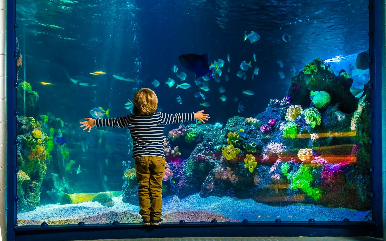AquaDom & SEA LIFE Berlin Ticket