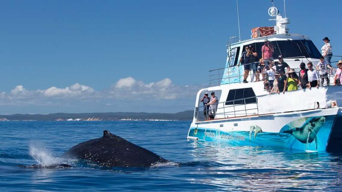 Three-Quarter Day Hervey Bay Premium Whale Watching Cruise