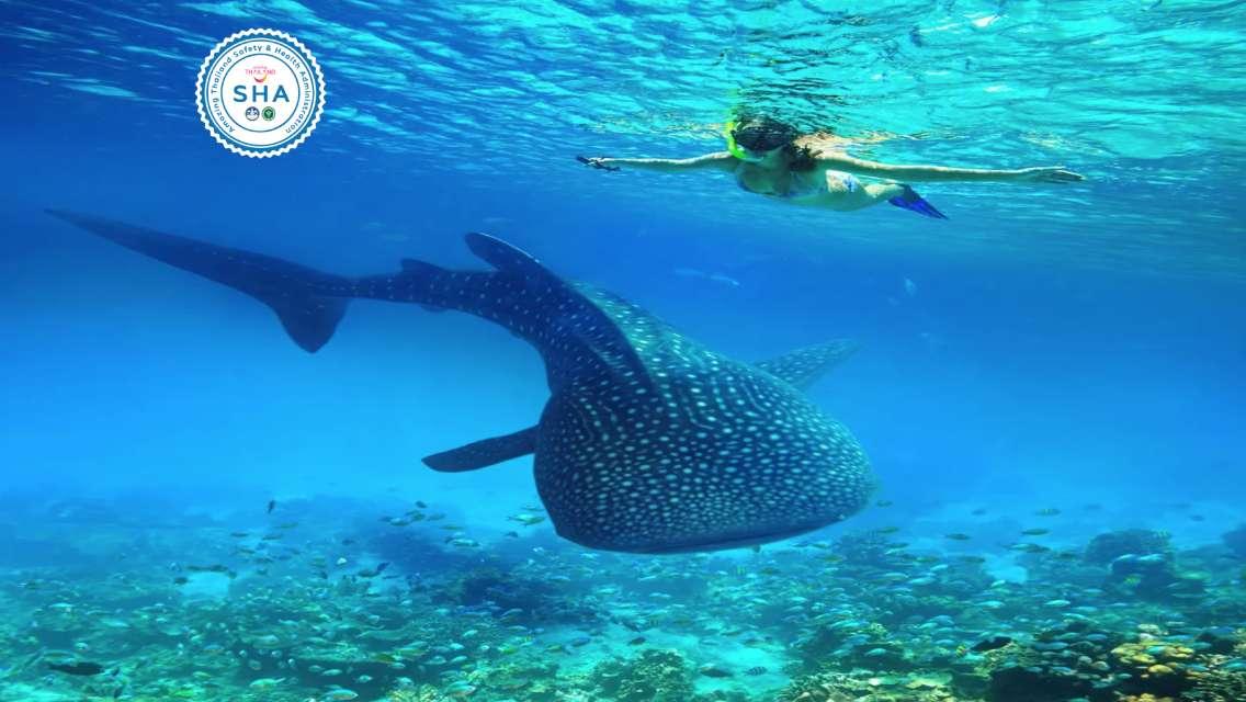 Phuket to Phi Phi Island + Khai Island + Bamboo Island + Maiton Island Snorkeling Day Trip [SHA Certified]