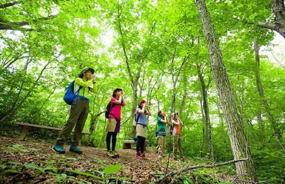 青森縣丨邂逅苔蘚組成的微觀叢林(連午餐)