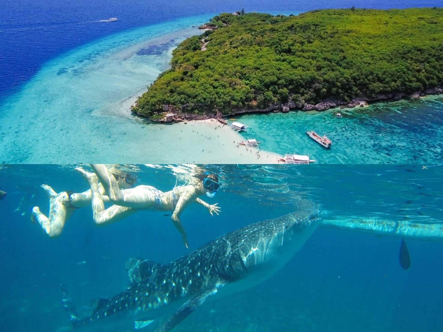 【セブ島満喫プラン】ジンベイザメと泳ぐ+スミロン島へのアイランドホッピングツアー