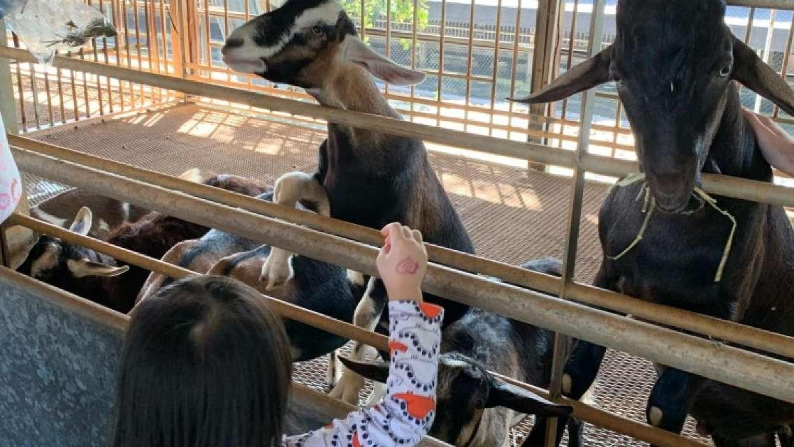 Animal and Technology farm Family Fun Tour