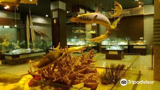 深海貝殼世界