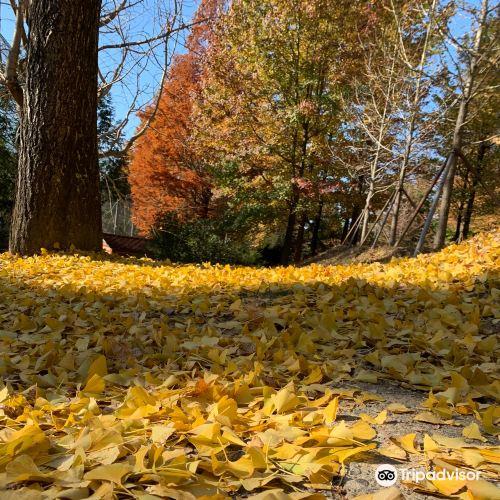 慶尚南道樹木園