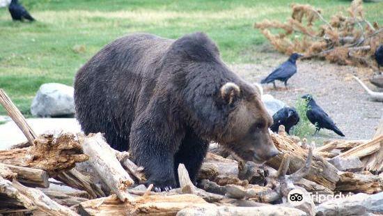 灰熊與狼保護中心