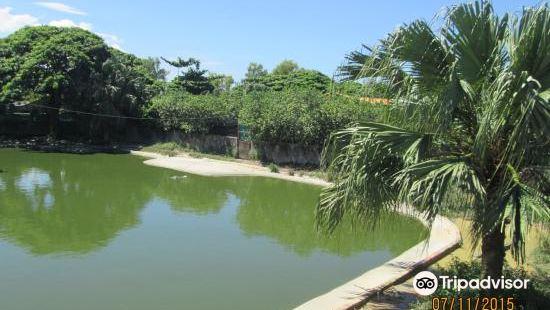 鬥亞蘭鱷魚養殖場