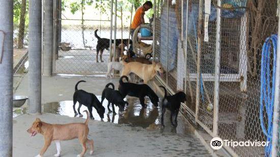 Soi Dog Foundation