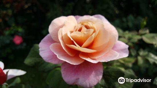 James P Kelleher Rose Garden