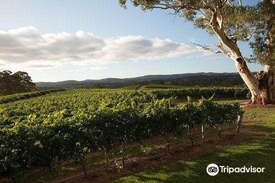 Nepenthe Wines
