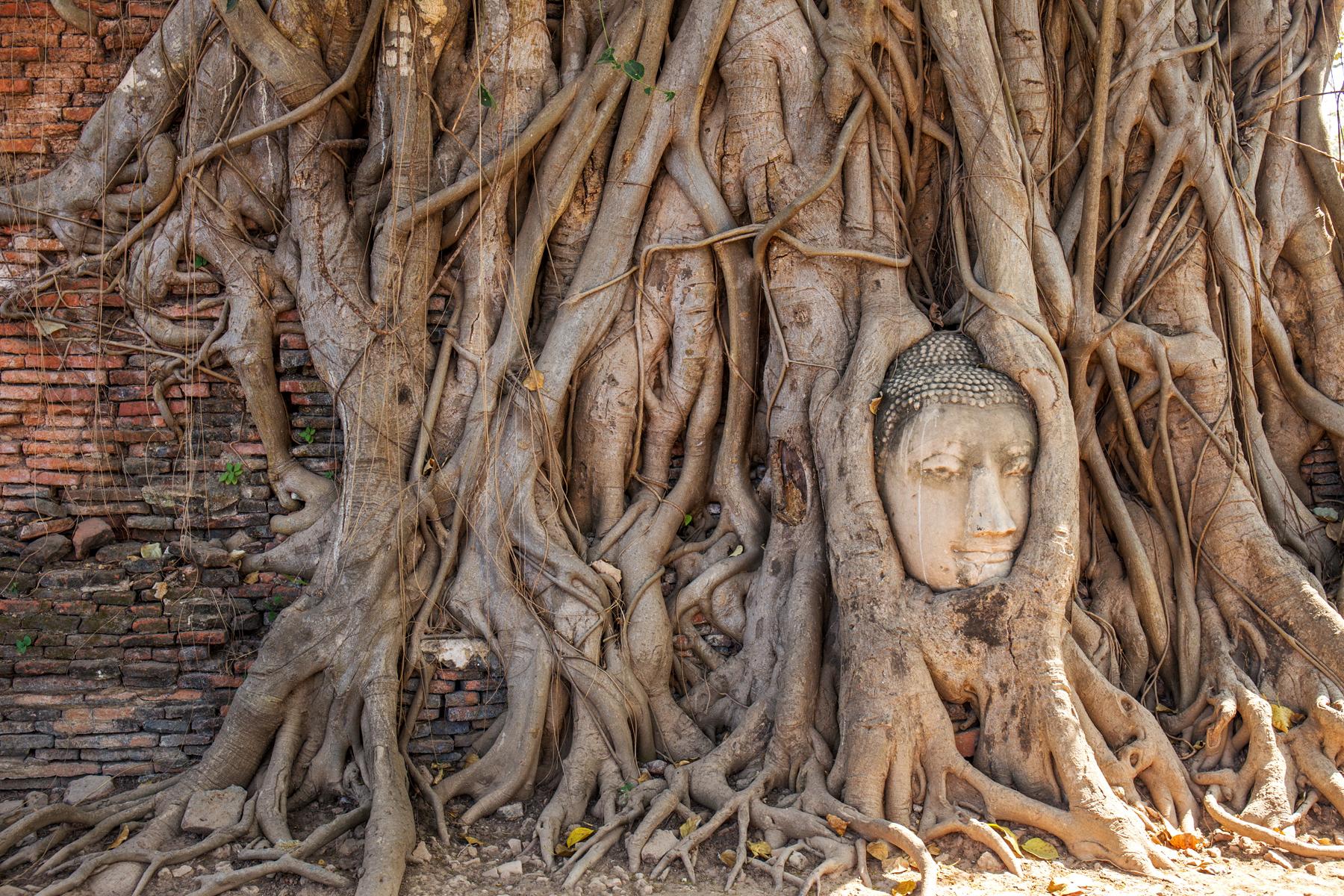 Ayutthaya Day Tour from Bangkok: Bang Pa-In Summer Palace, Wat Mahathat and more