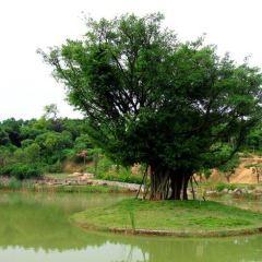 Baxianshan Park User Photo