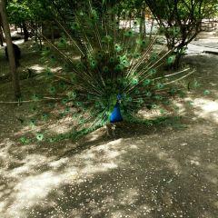 雞西動植物園用戶圖片