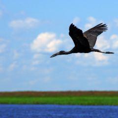 Zambezi River Cruise User Photo