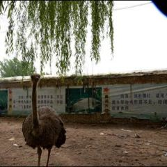 鴕鳥王生態園のユーザー投稿写真