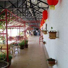 Tai Chi Island Wetland Park User Photo