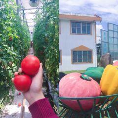 Shanghai Sunqiao Modern Agricultural Development Zone User Photo