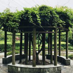 Zhoupu Park User Photo