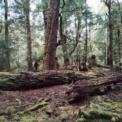 Tarkine User Photo