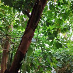 龜茲生態園用戶圖片