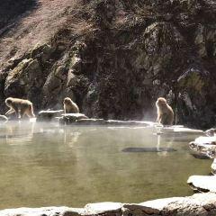 地獄谷野猿公苑のユーザー投稿写真