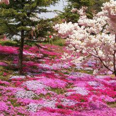 잉거스(영가석) 식물원 여행 사진