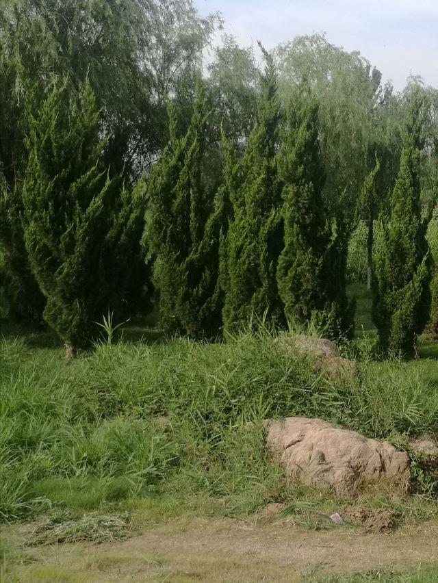Shouguang Bohai Forestry Park