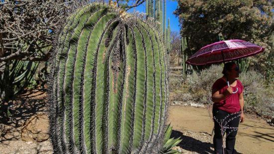 这是瓦哈卡一家十分值得一来的植物园,这里种植着具有南美洲热带