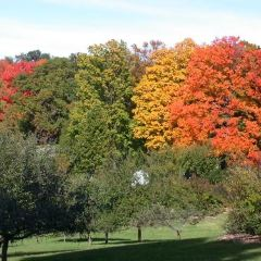 Sherwood Arboretum User Photo