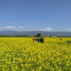Yunshang Flower Sea User Photo