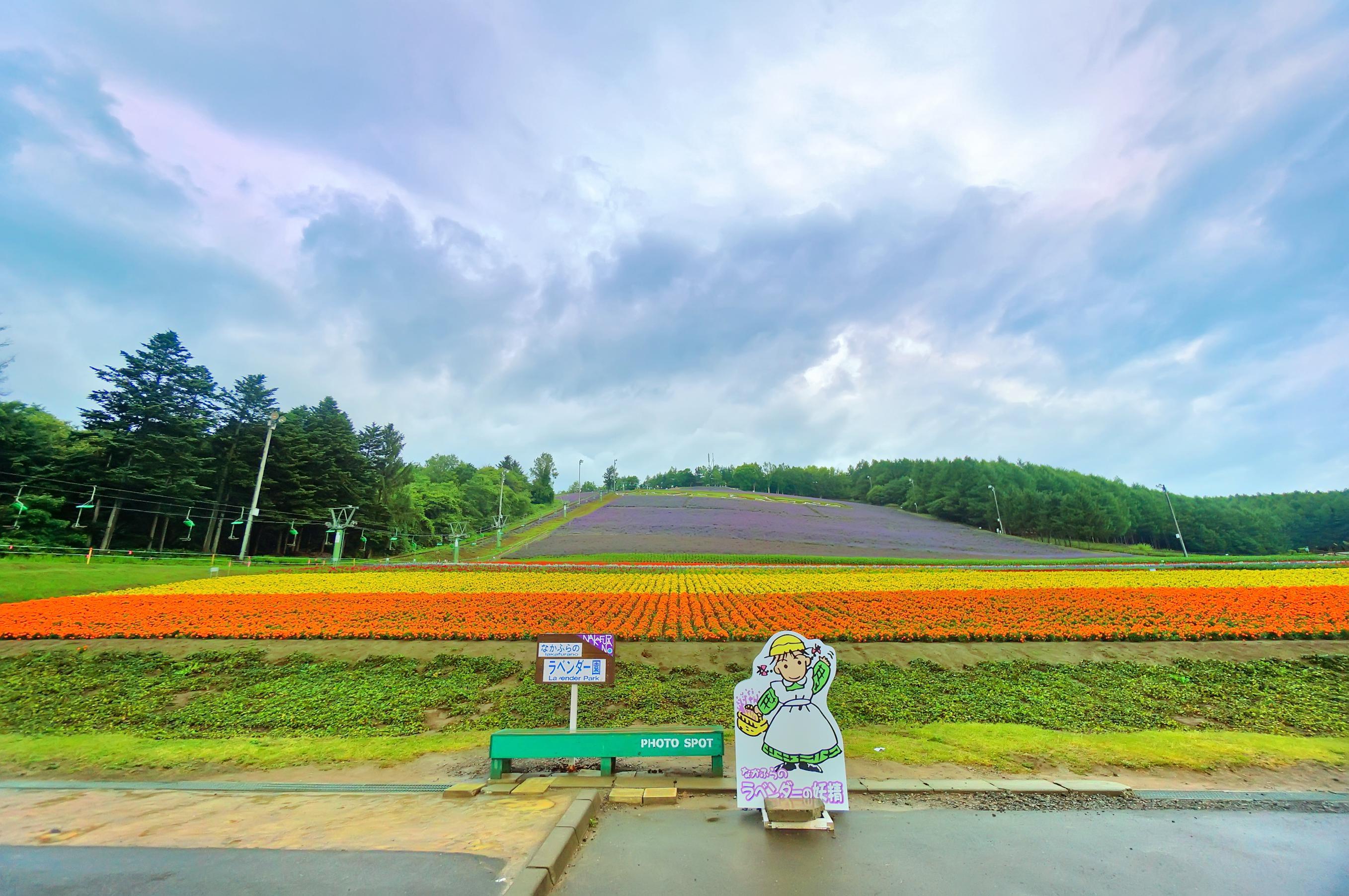 Choei Lavender Park