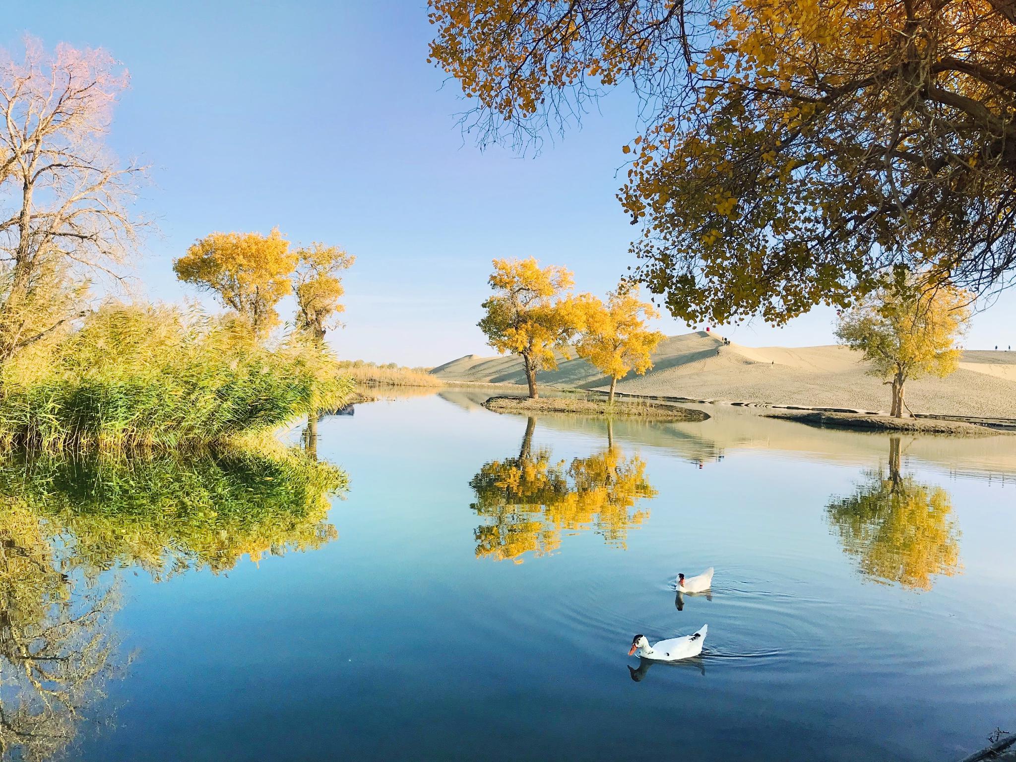 胡楊林自然公園