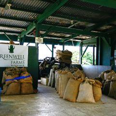 Greenwell Coffee Farm 여행 사진