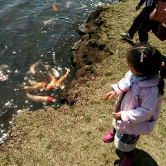志高湖用戶圖片