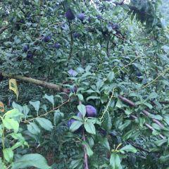 青草水果農莊用戶圖片