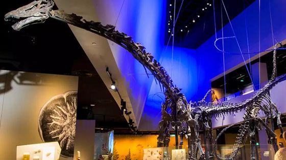 싱가포르 리콩치엔 자연사 박물관 입장권