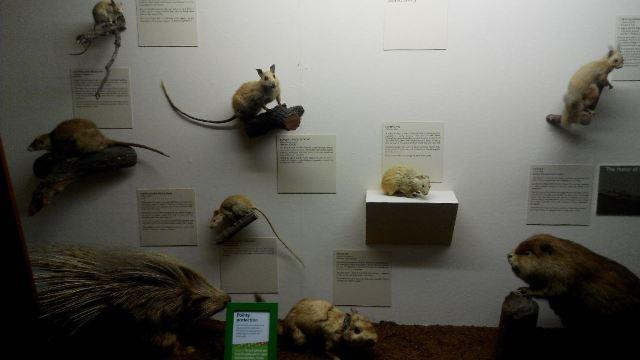 Western Australian Museum-Perth