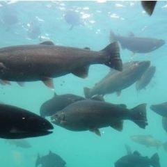 Underwater World User Photo