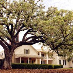 Texas White House User Photo