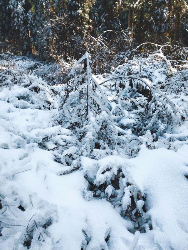 룽츠(용지) 국립수목원