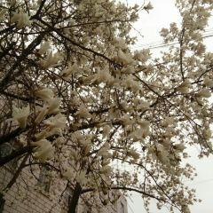 ZhongGuoKuangYeDaXue WenChang XiaoQu KeXueGuan User Photo