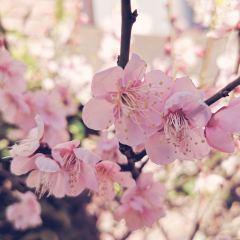 箱根旧街道のユーザー投稿写真