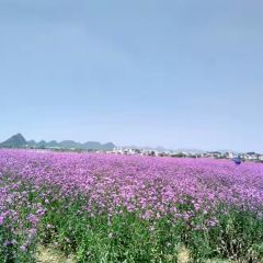 Shenxian (Spirit Fairy) Lake Sea of Flowers User Photo