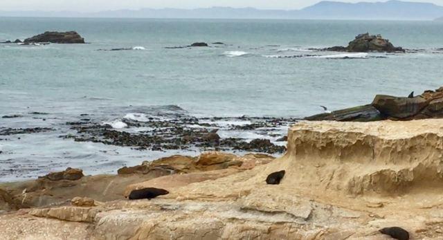 Shag Point Nature Reserve