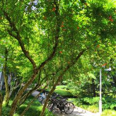 Old Street along Rhine User Photo
