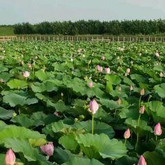 遼河七星湖景區用戶圖片