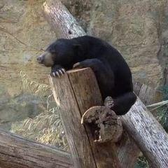 聖安東尼奧動物園暨水族館用戶圖片