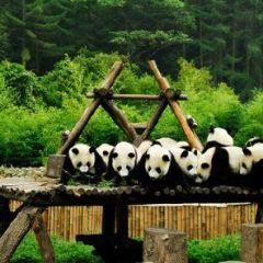 西寧野生動物園歡樂谷用戶圖片